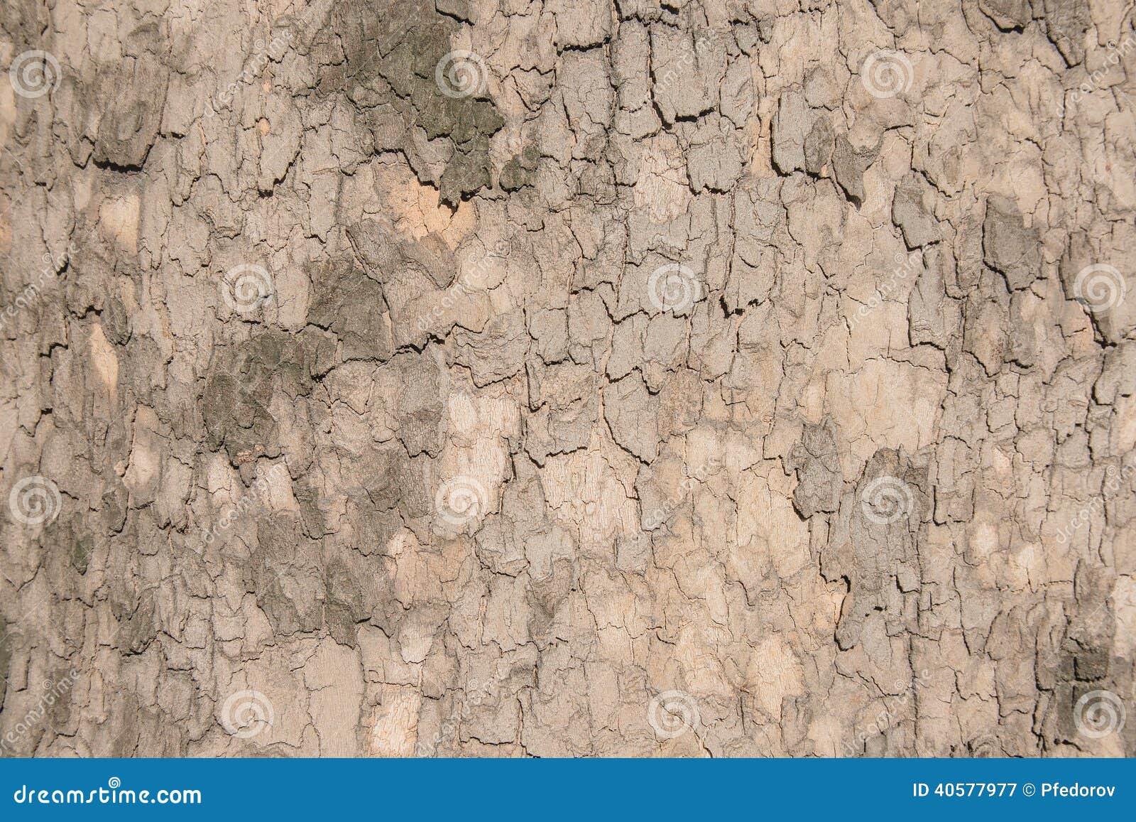 Текстура плоского дерева