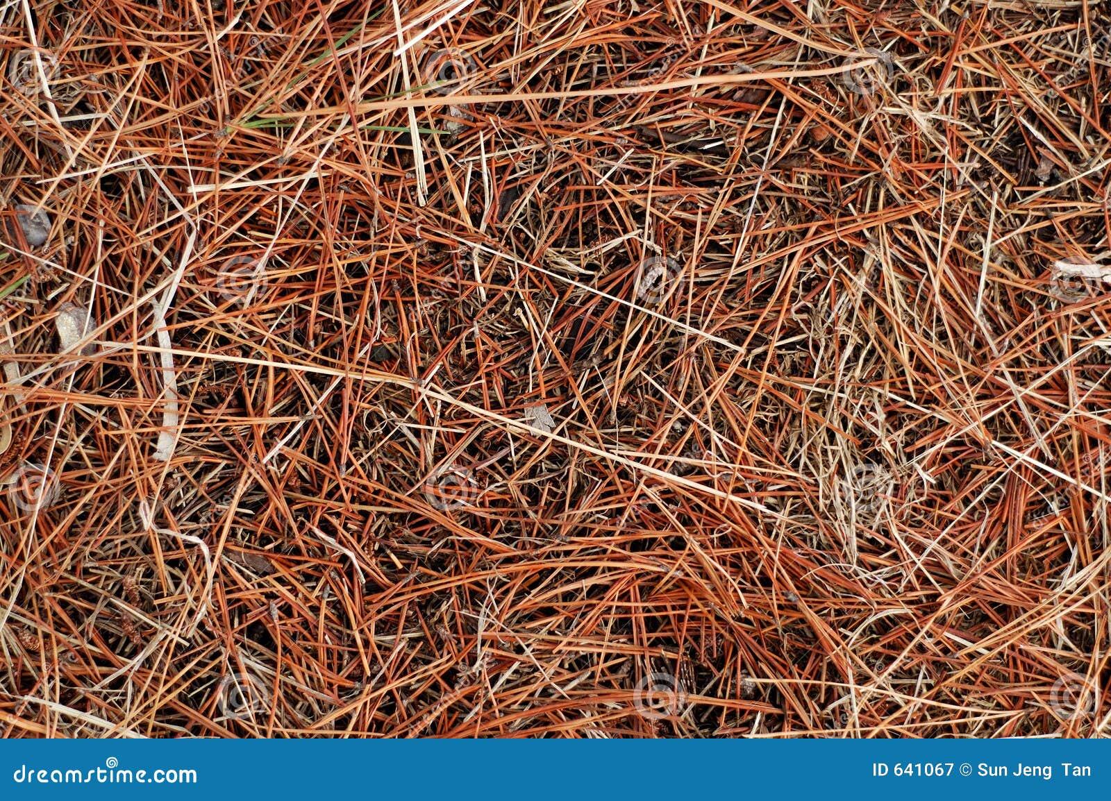 Download текстура сухой травы стоковое изображение. изображение насчитывающей куча - 641067