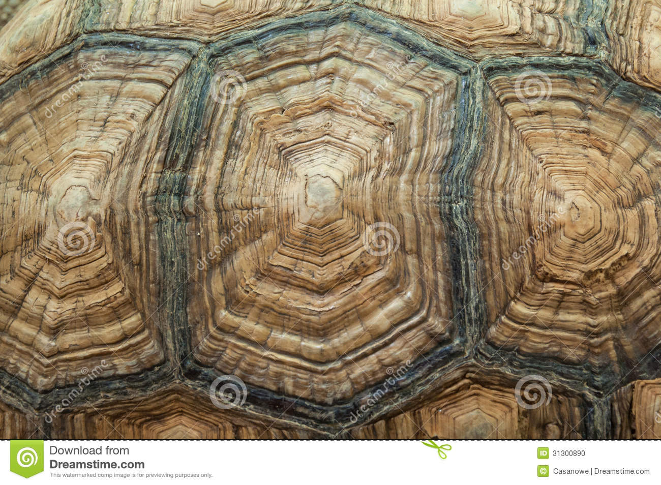 Turtle shell pattern wallpaper