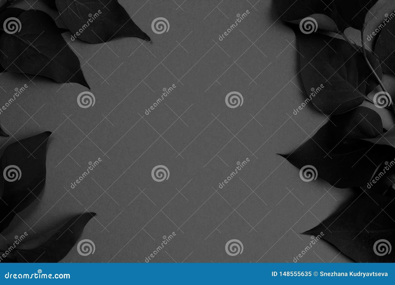 Текстурируйте рамку листьев темных - серое фото