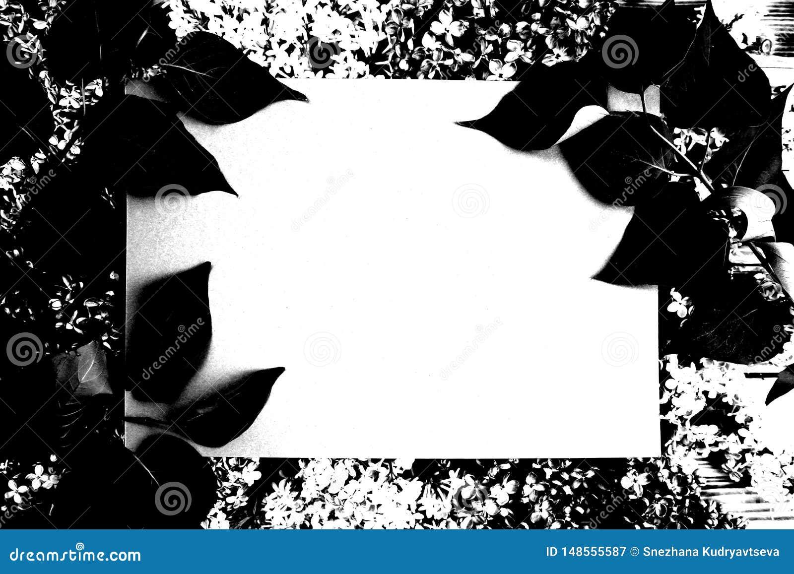 Текстурируйте рамку фото листьев темного черно-белого