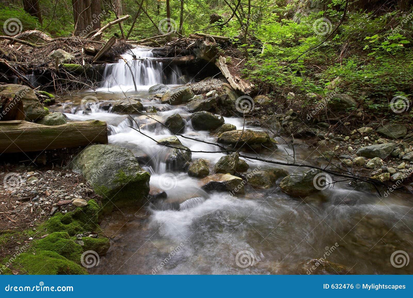 Download текущая вода стоковое фото. изображение насчитывающей папоротник - 632476