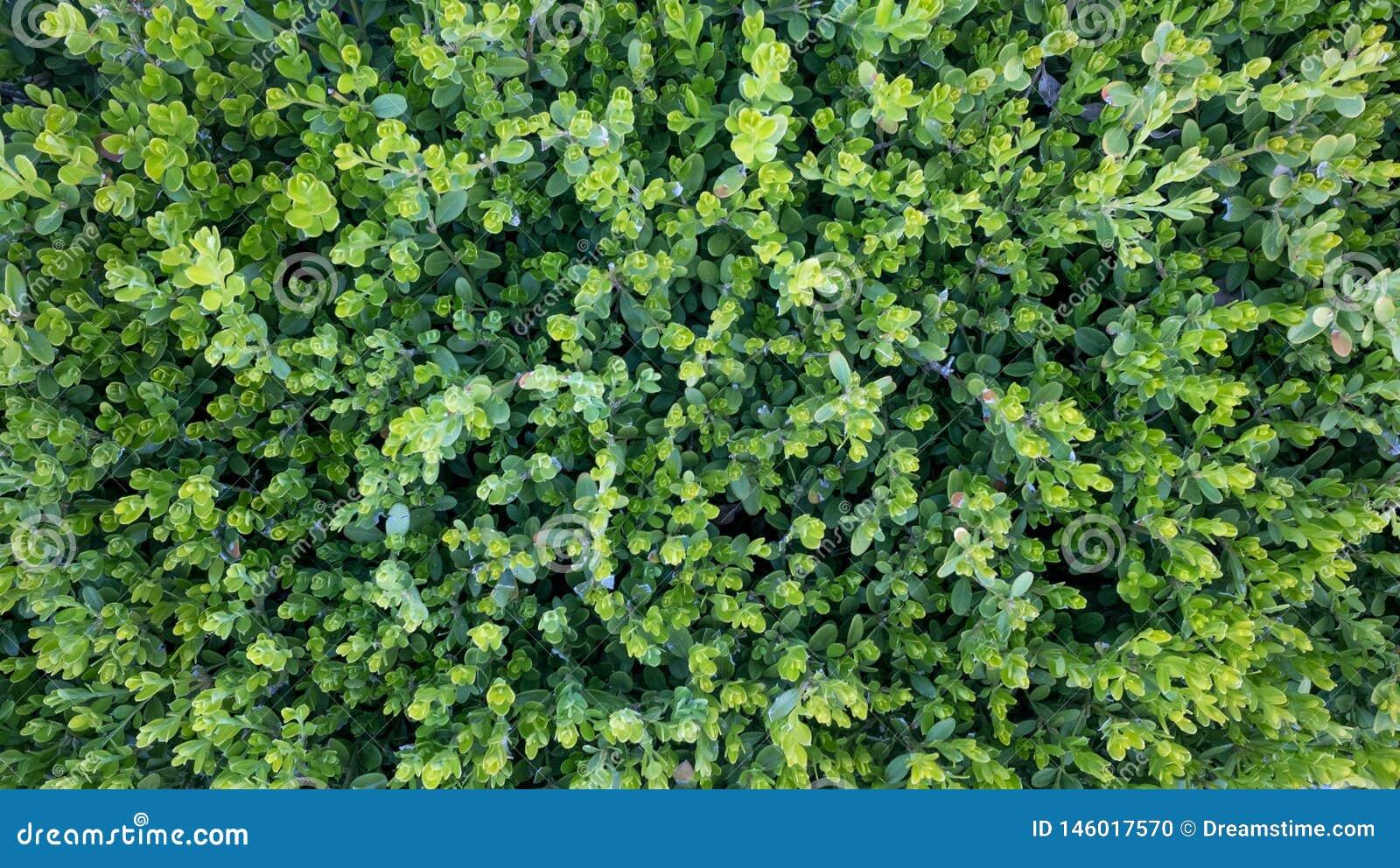 Темная ая-зелен трава, красивая природа, диаграмма сверху