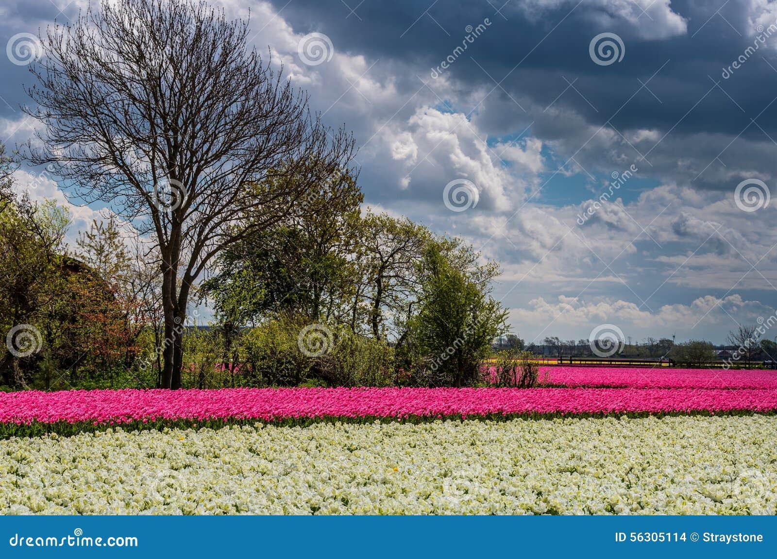 Темные облака и яркие цветки