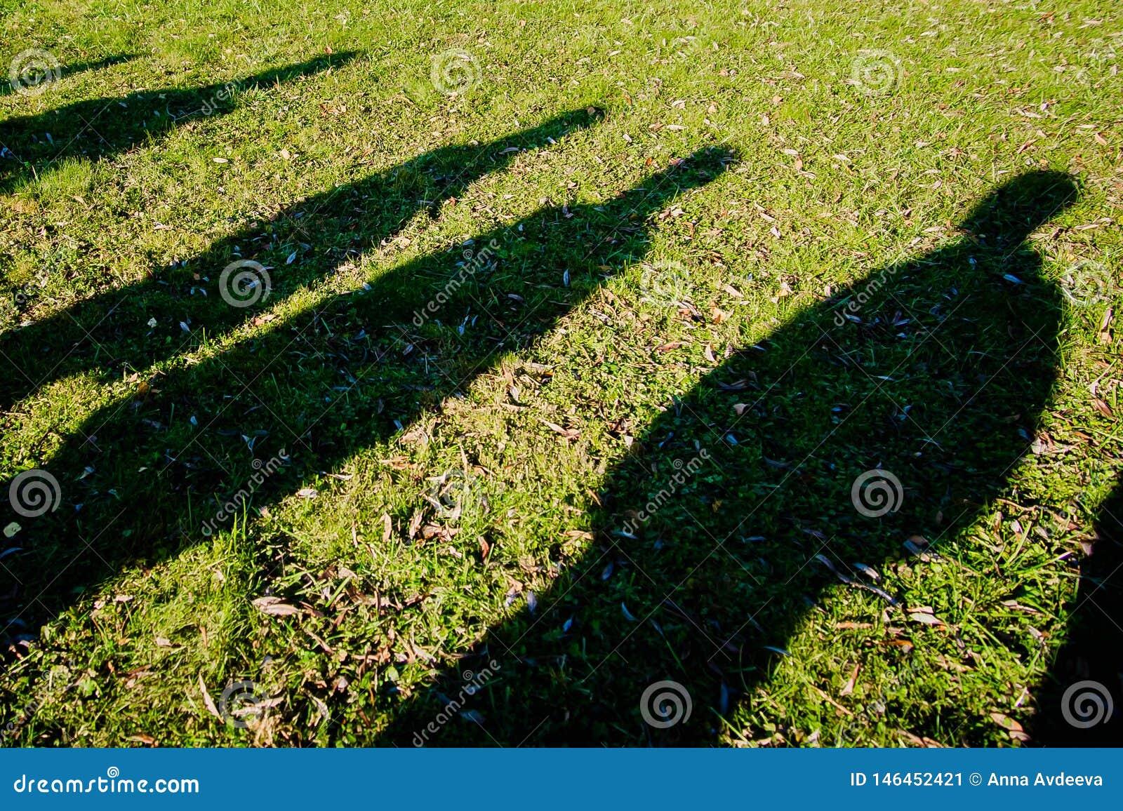 Тени нескольких людей на зеленой траве