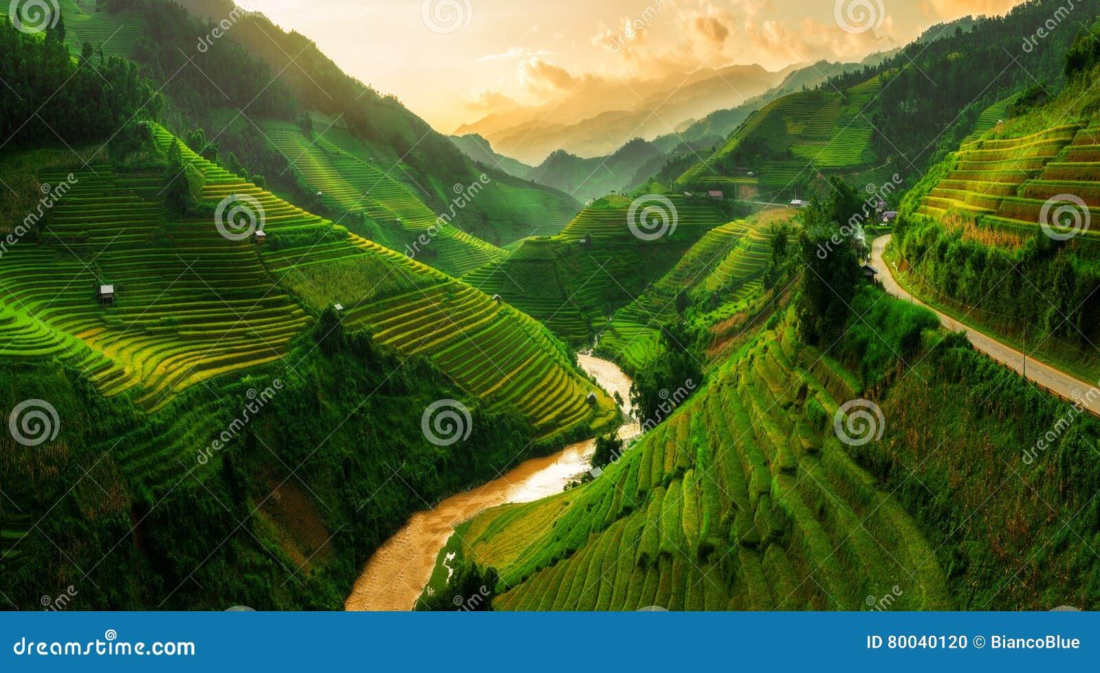 Террасное поле риса в Mu Cang Chai, Вьетнаме
