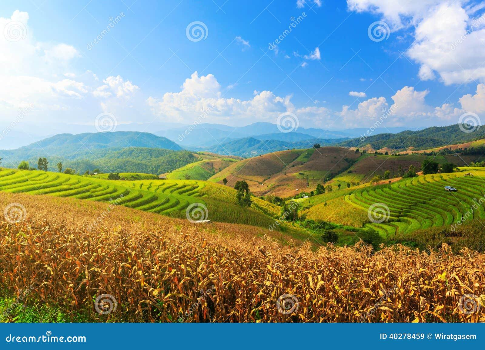 Террасные рисовые поля в деревне Mae-варенья