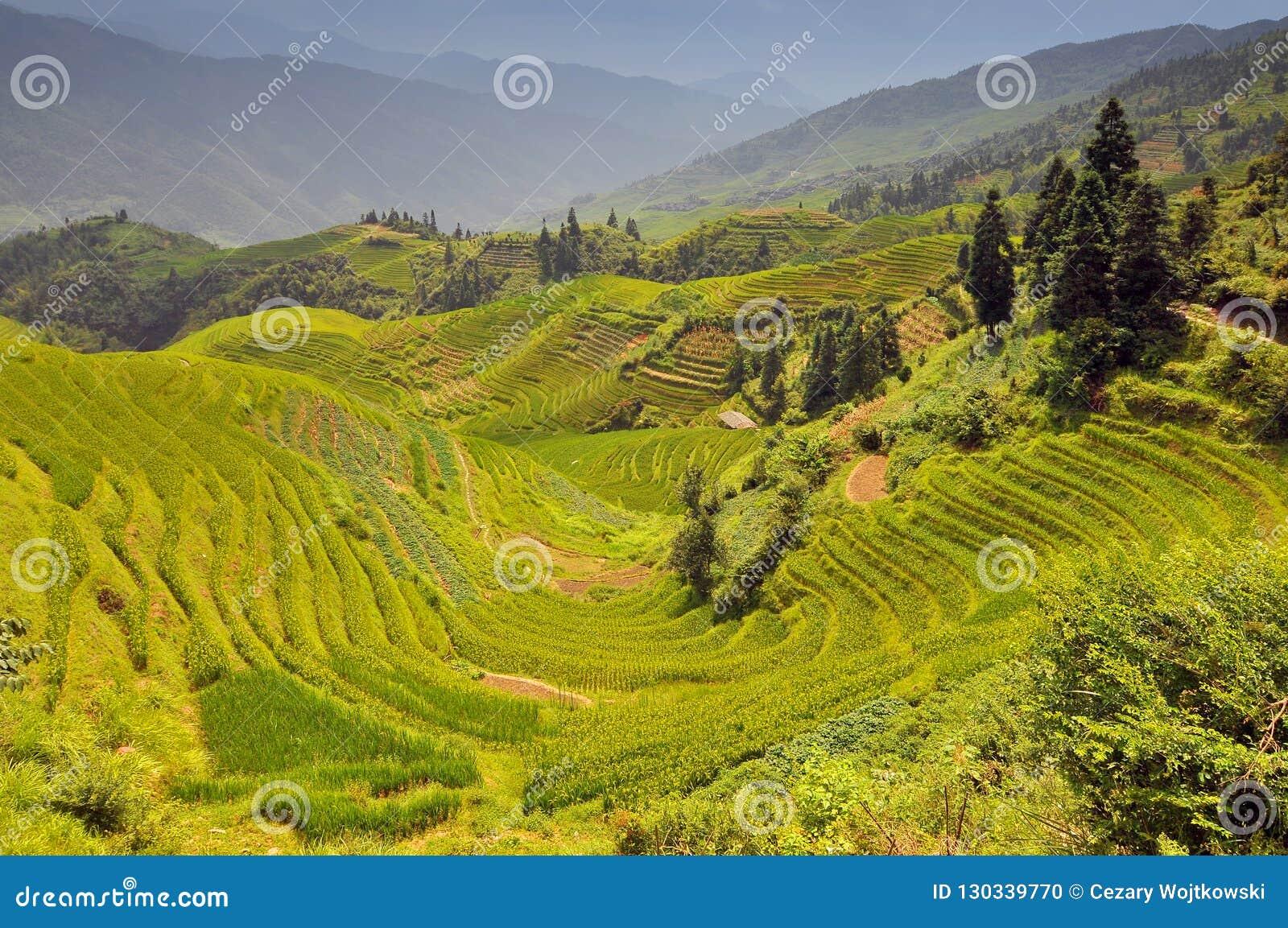 Террасы риса, Longji Titian, Guilin, Guangxi, Китай