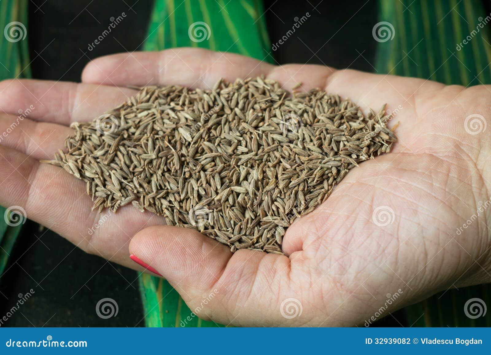 Тимон в руке