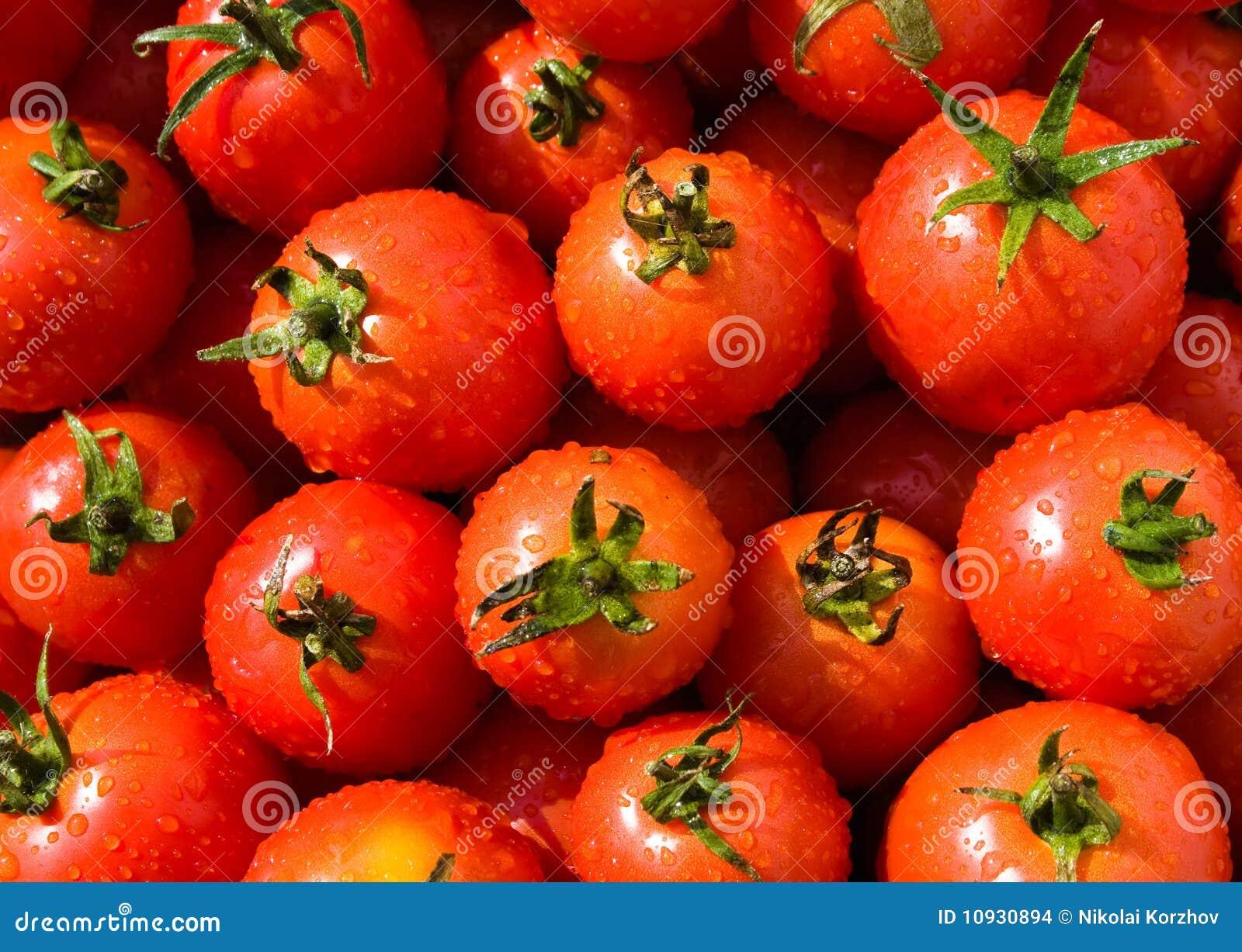 томаты выбранные предпосылкой