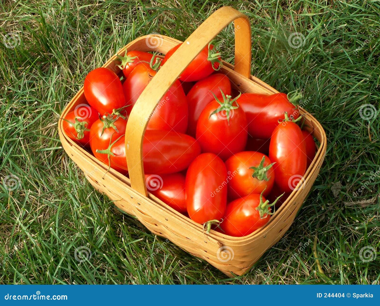 томат корзины