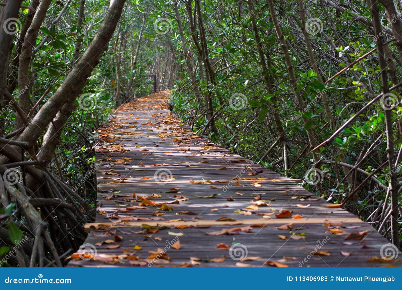 Тоннель дерева в Mang на следе природы леса Laem Phak Bia Petrove