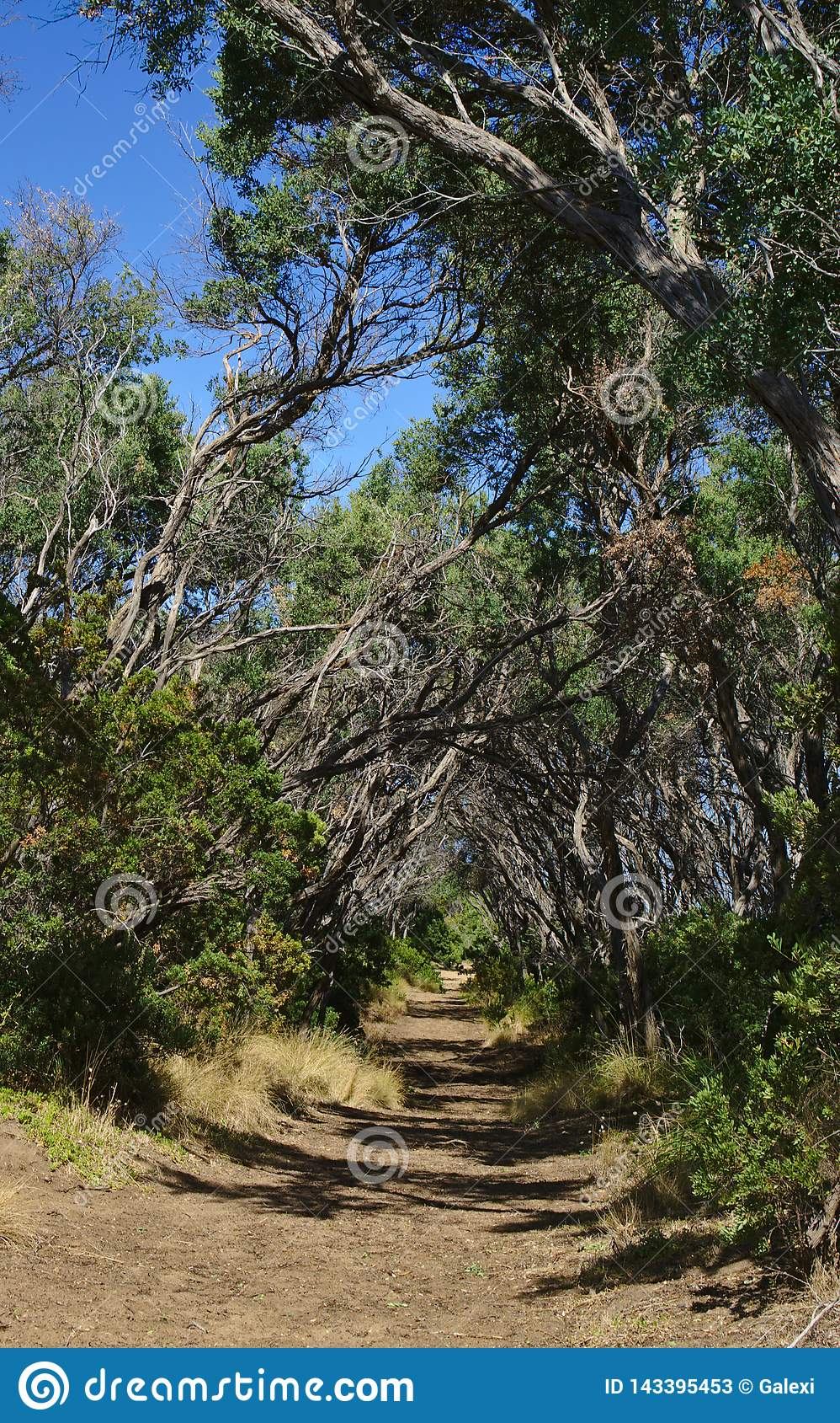 Тоннель как идя путь в лесе
