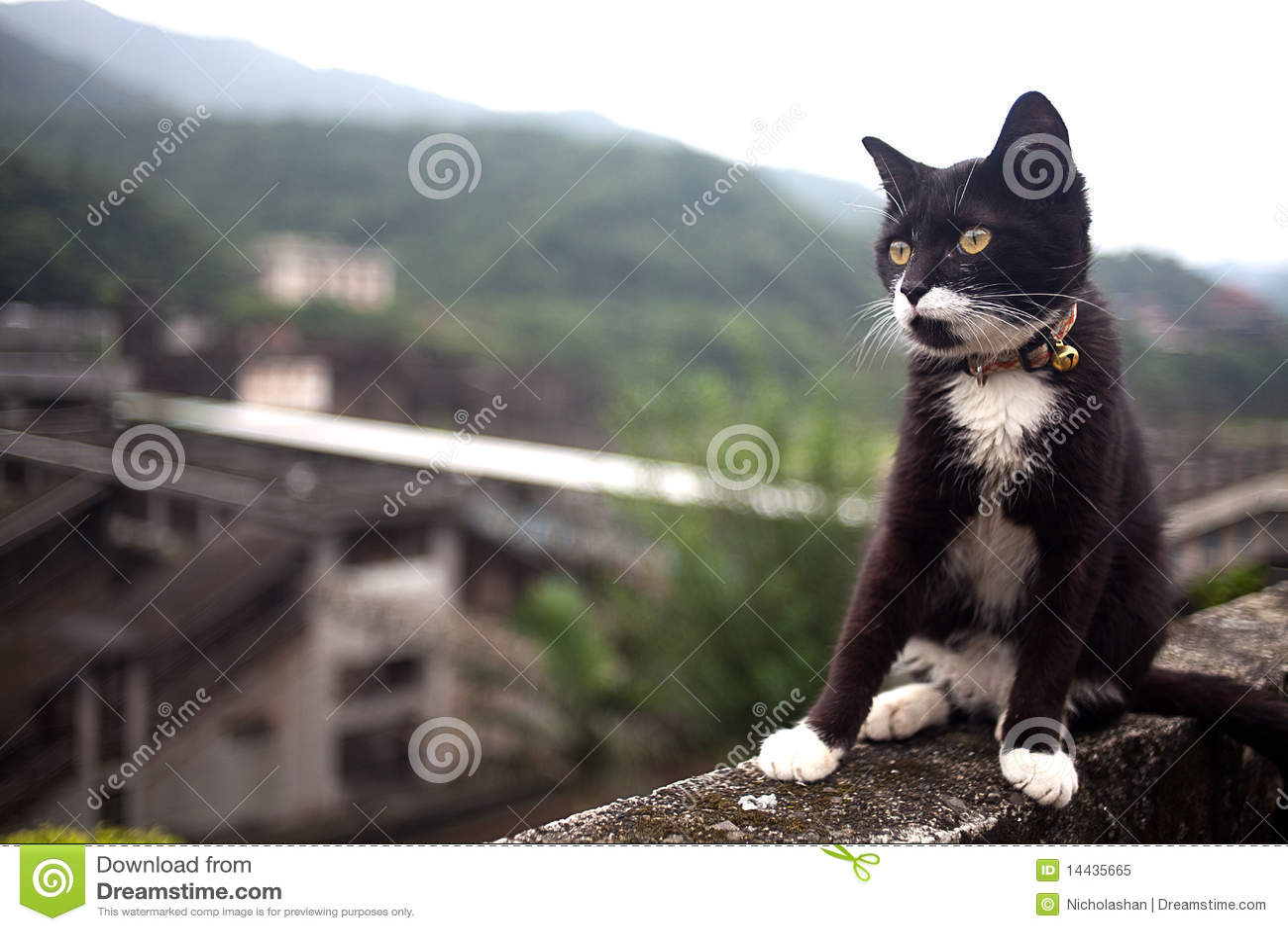 тоннель hou s taiwan кота