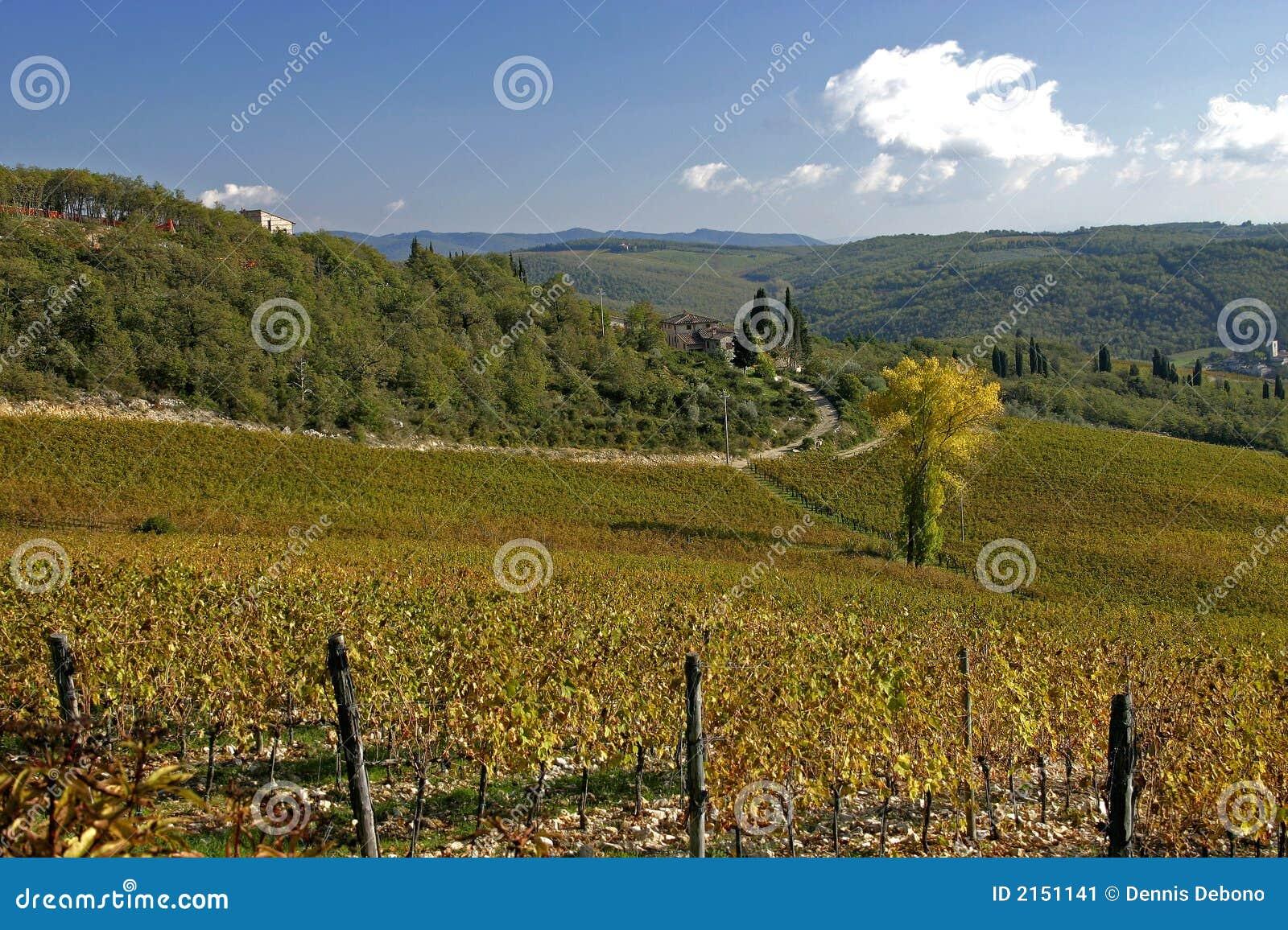 тосканский виноградник