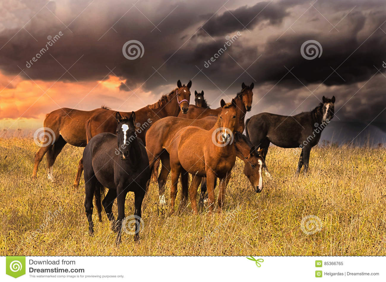 Толпа лошадей