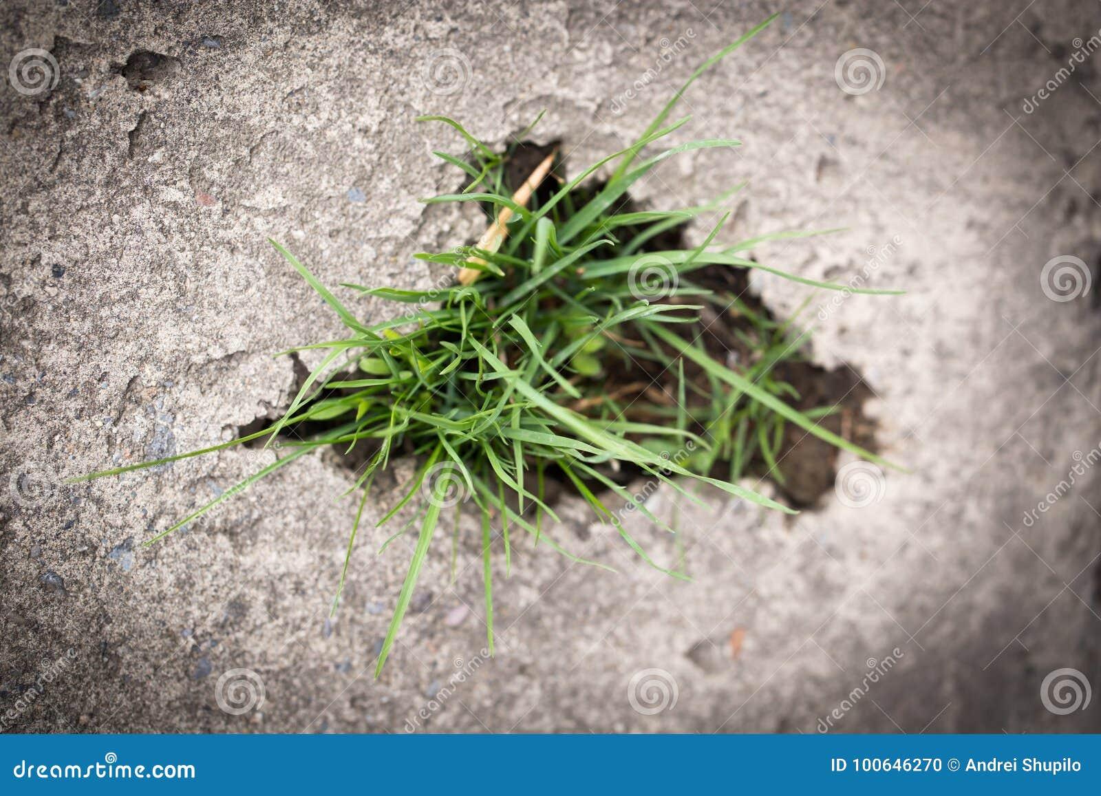 Трава в бетоне срок выдержки бетона