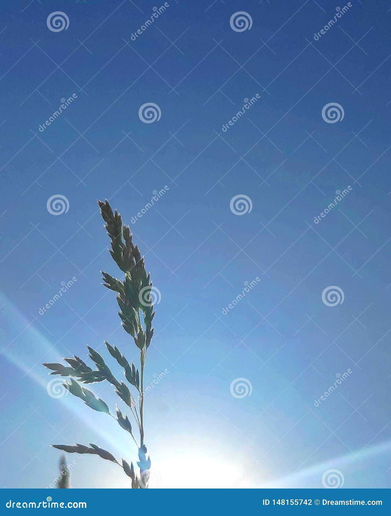 Трава и заход солнца поля