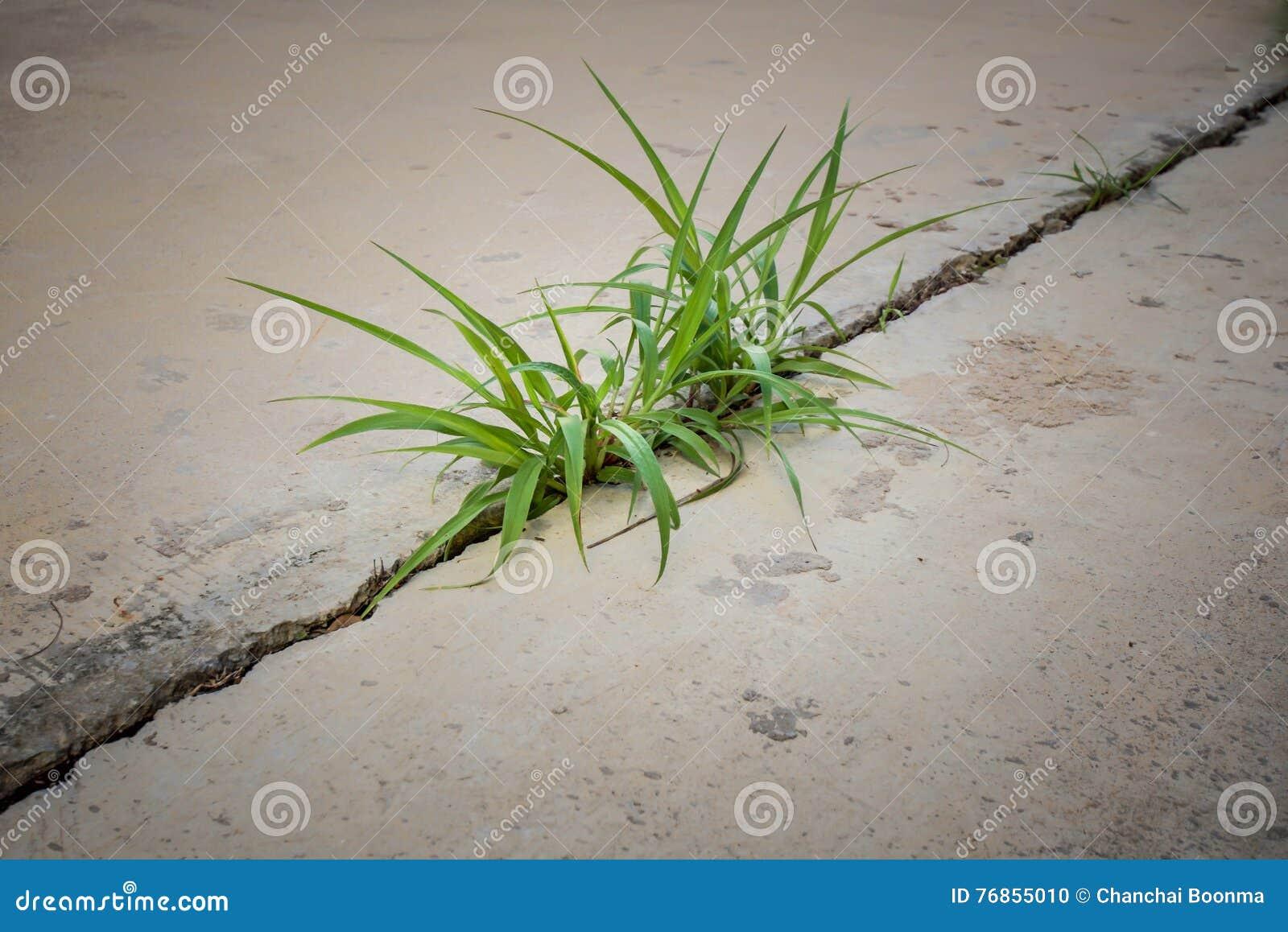 Трава в бетоне как штукатурить стену цементным раствором по маякам