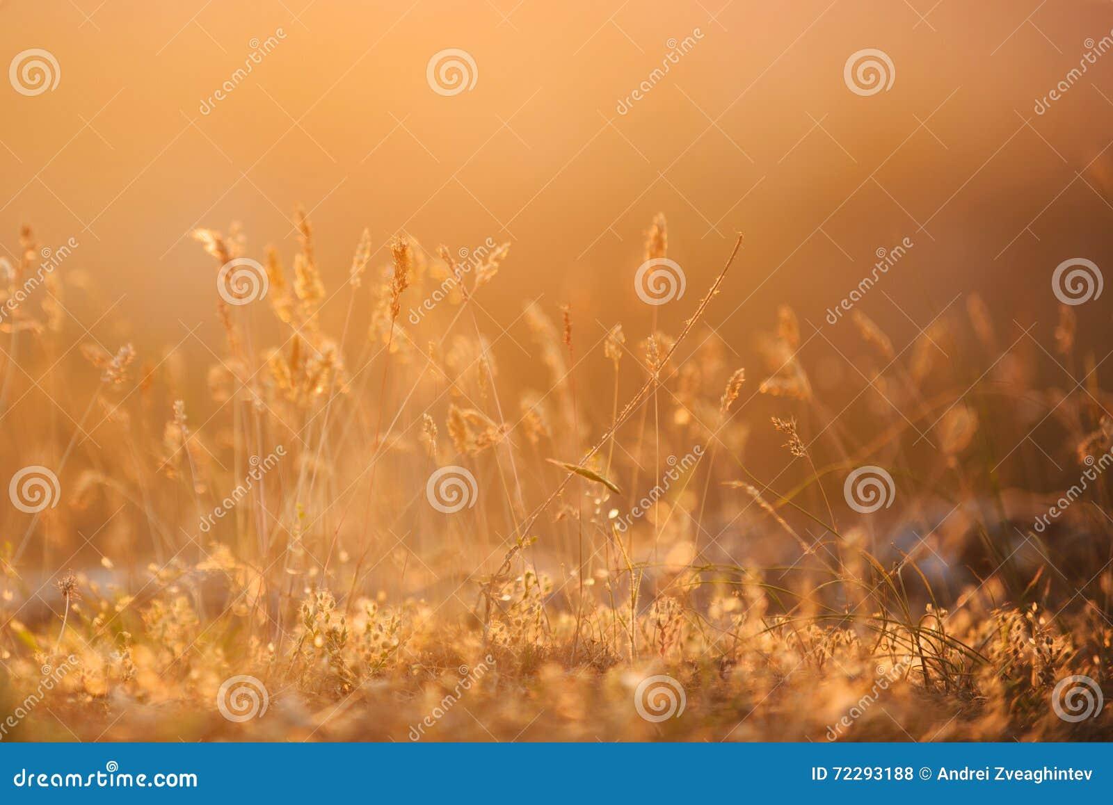 Download Трава на заходе солнца стоковое фото. изображение насчитывающей день - 72293188
