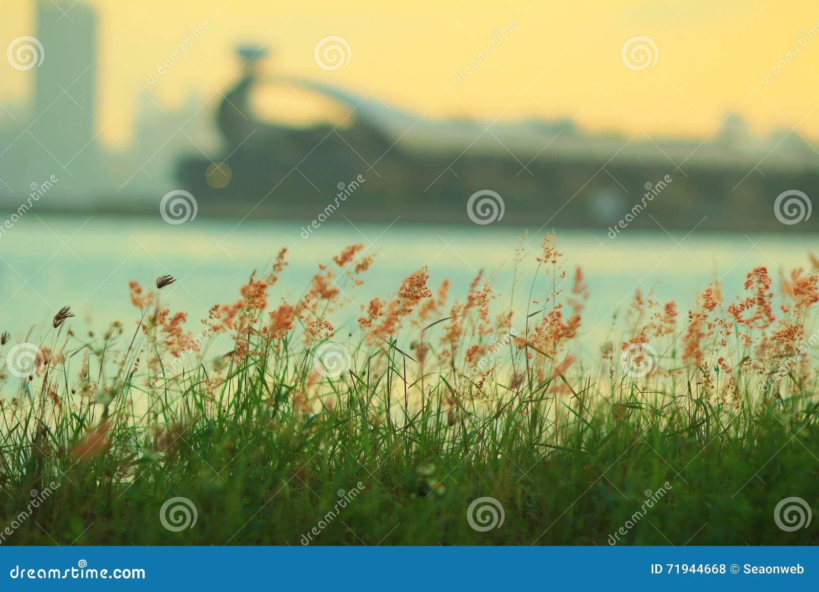 Трава на схвате Tsai Kwun болезненном