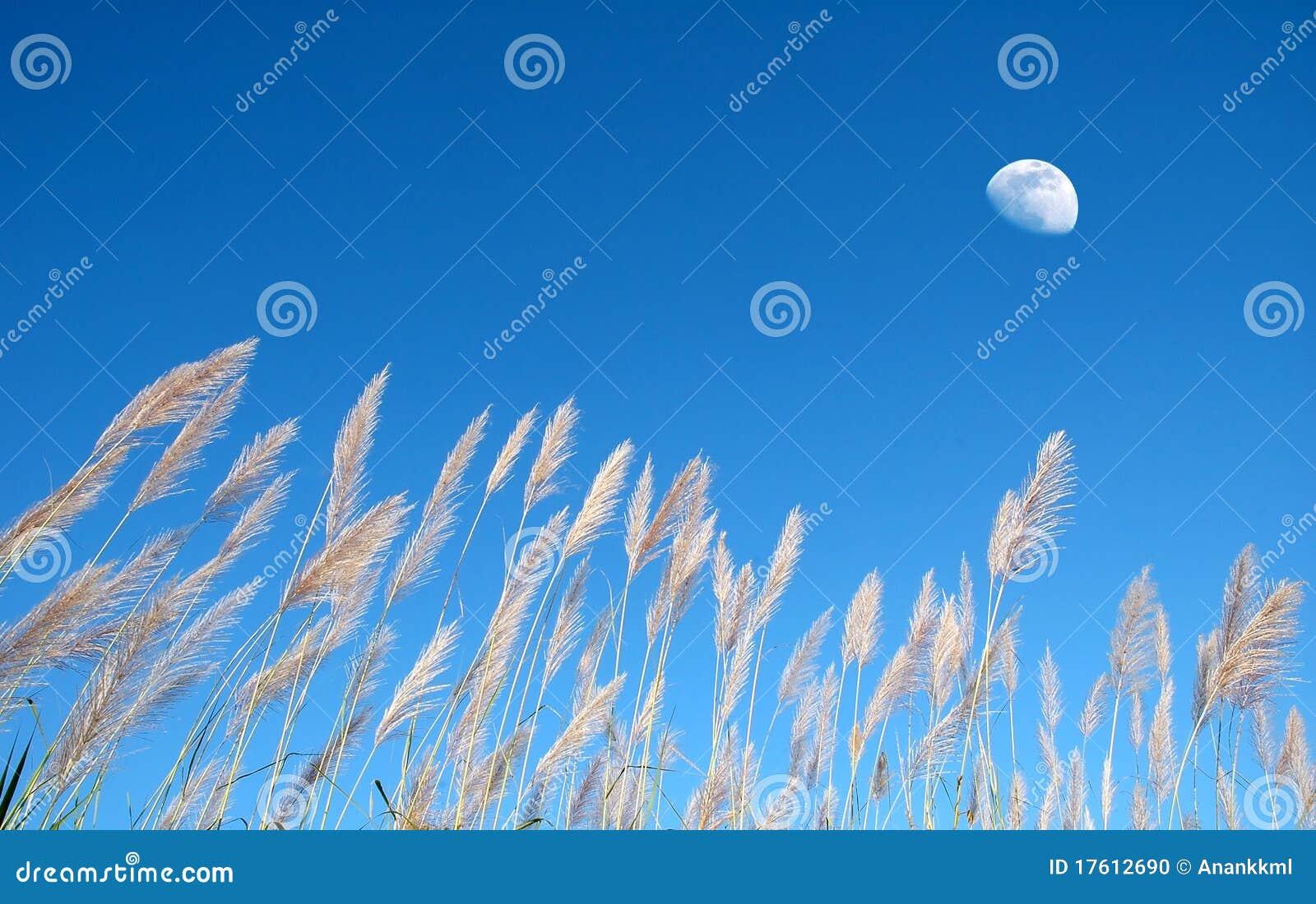 трава одичалая