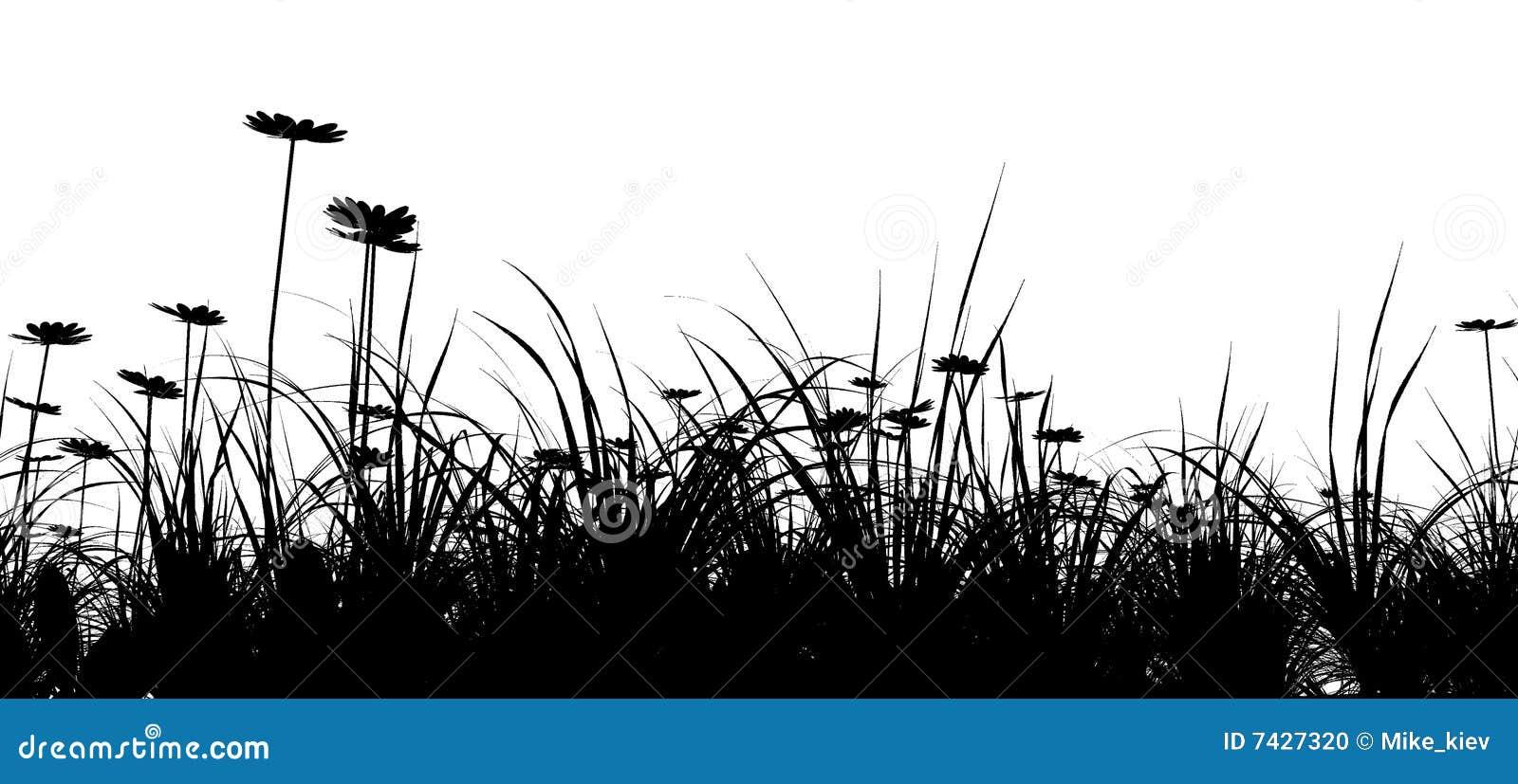 трава поля стоцвета