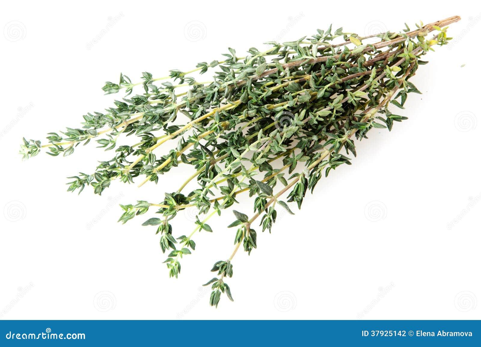Трава тимиана свежая