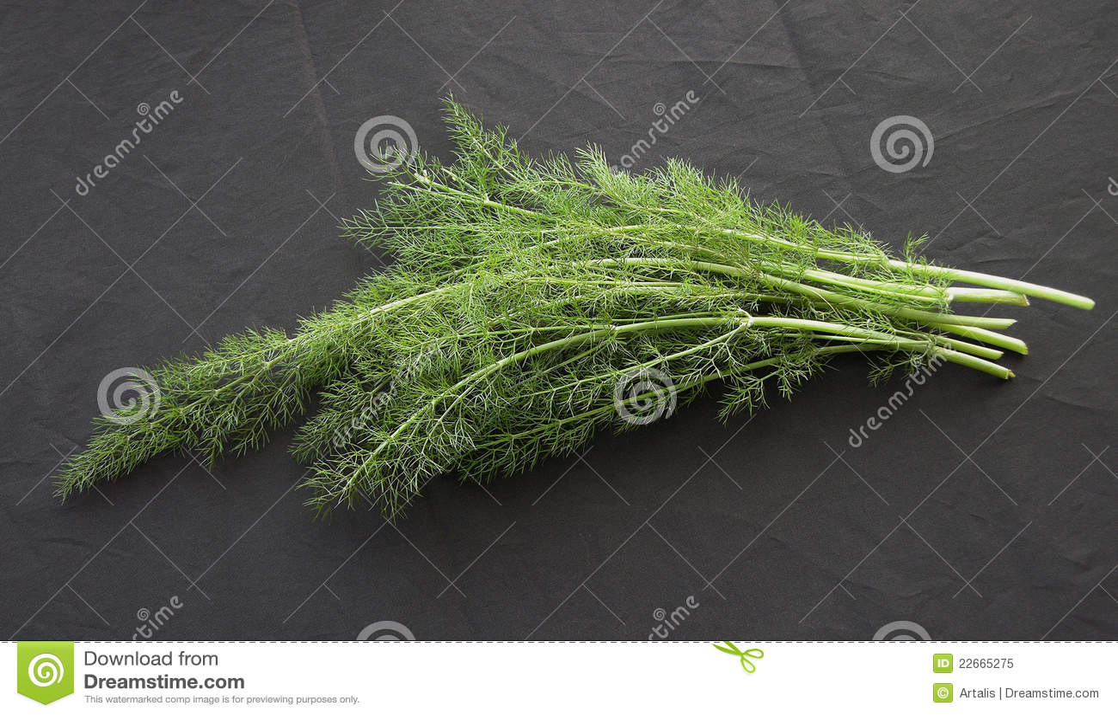 фенхель трава фото