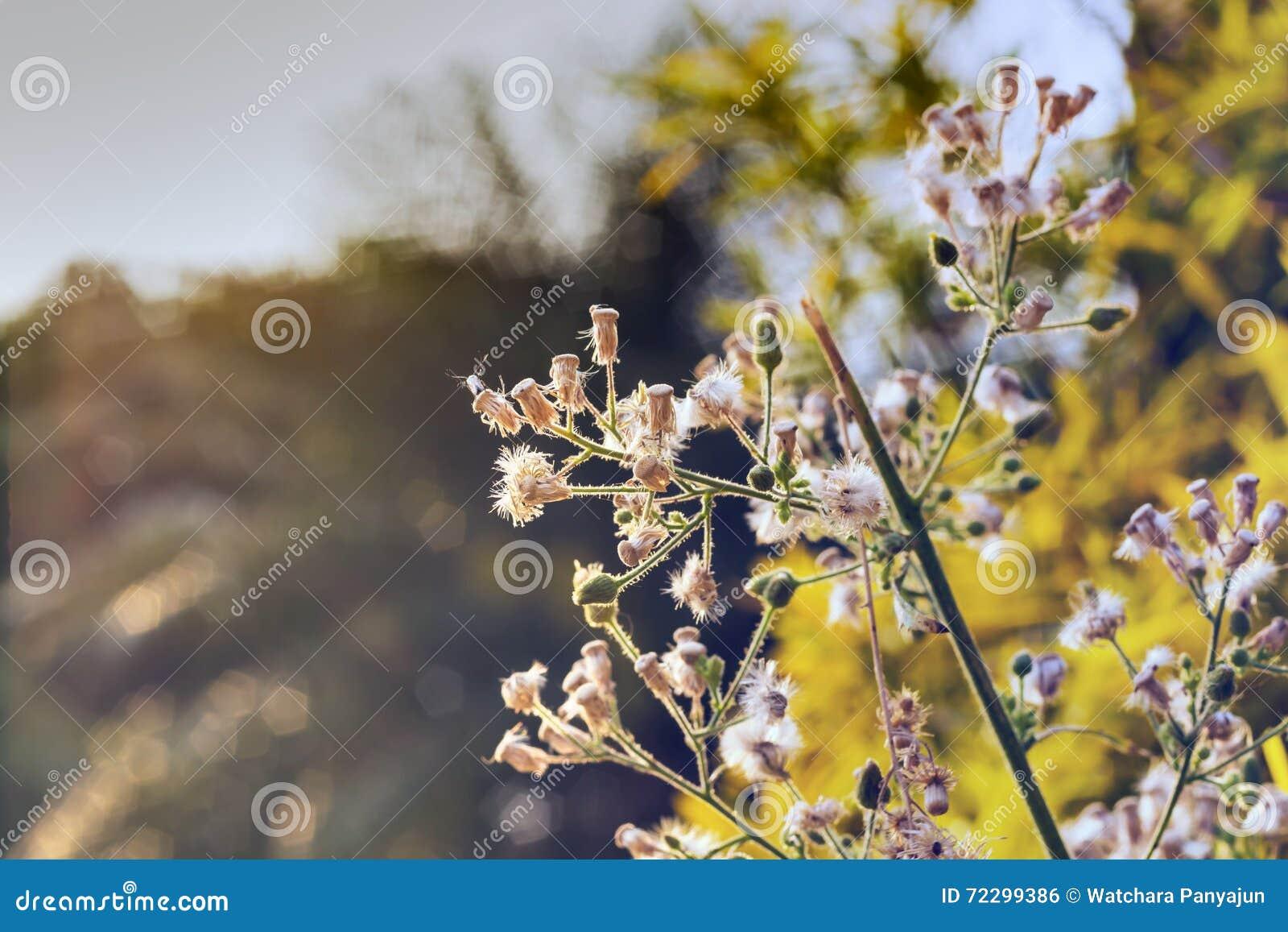 Download Трава цветка на ослабляет стоковое фото. изображение насчитывающей естественно - 72299386