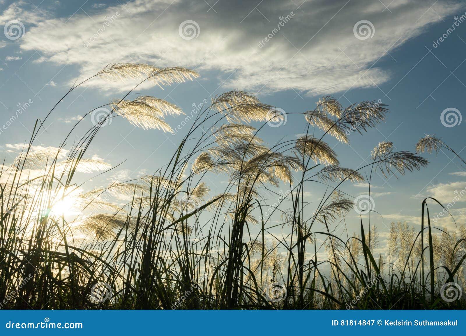 Трава цветка луга в внешней природе