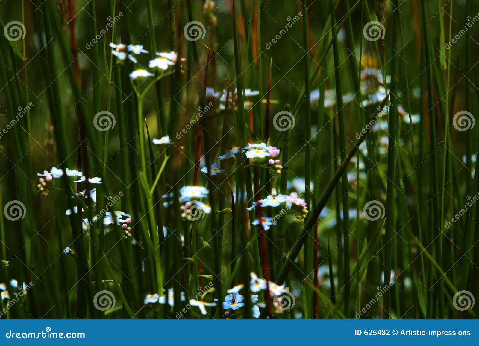 Download трава admongst стоковое фото. изображение насчитывающей ландшафт - 625482