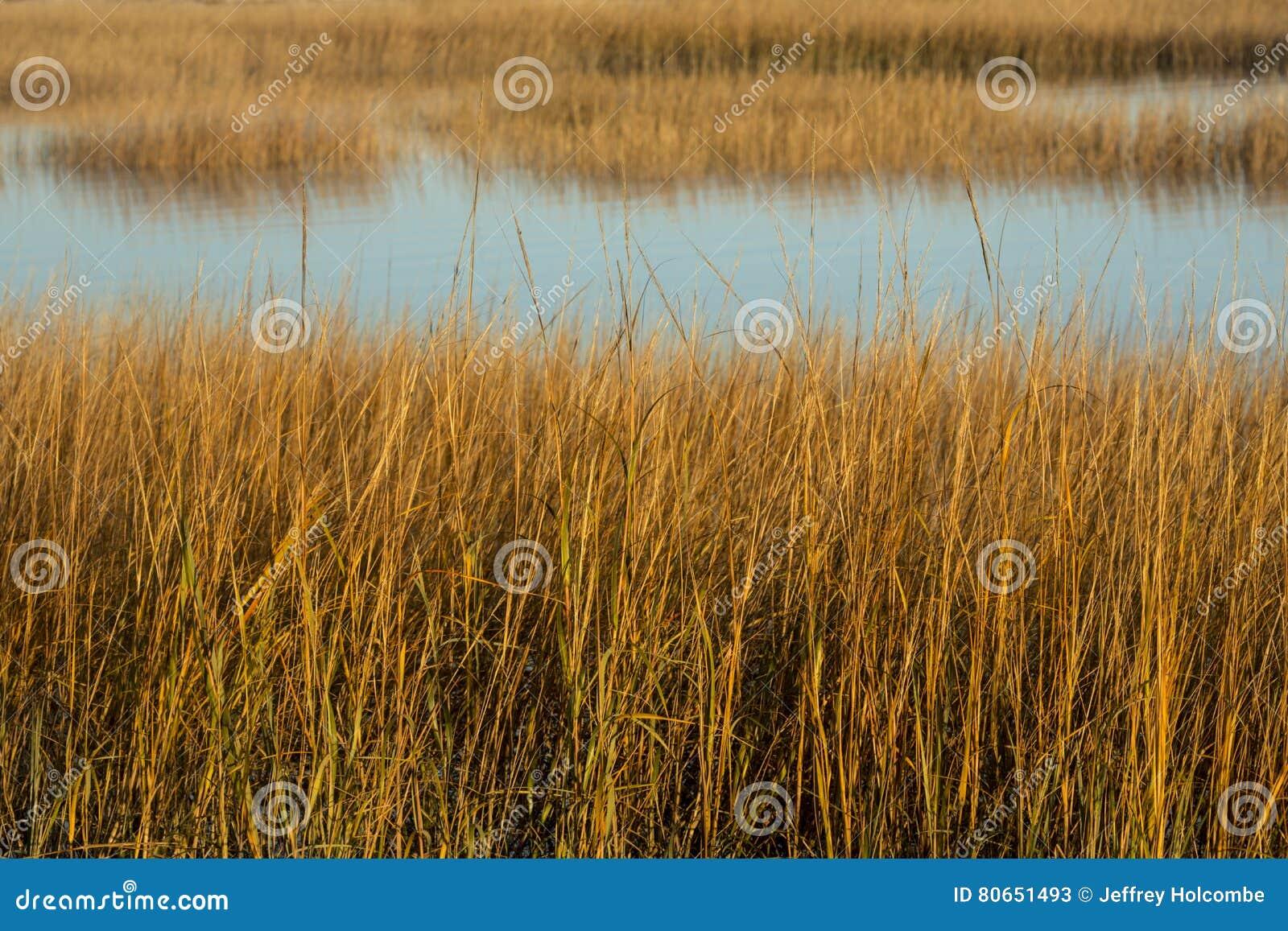 Травы болота на заходе солнца в падении на Milford указывают, Коннектикут