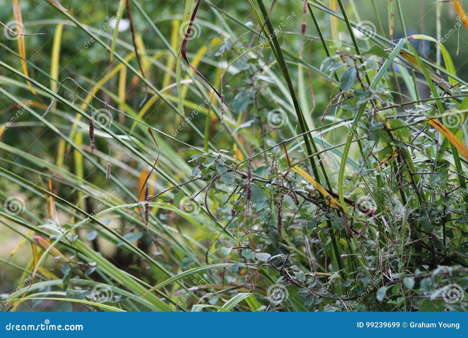 Травы в английском саде, крупном плане, с лавандой и малыми flowes 11