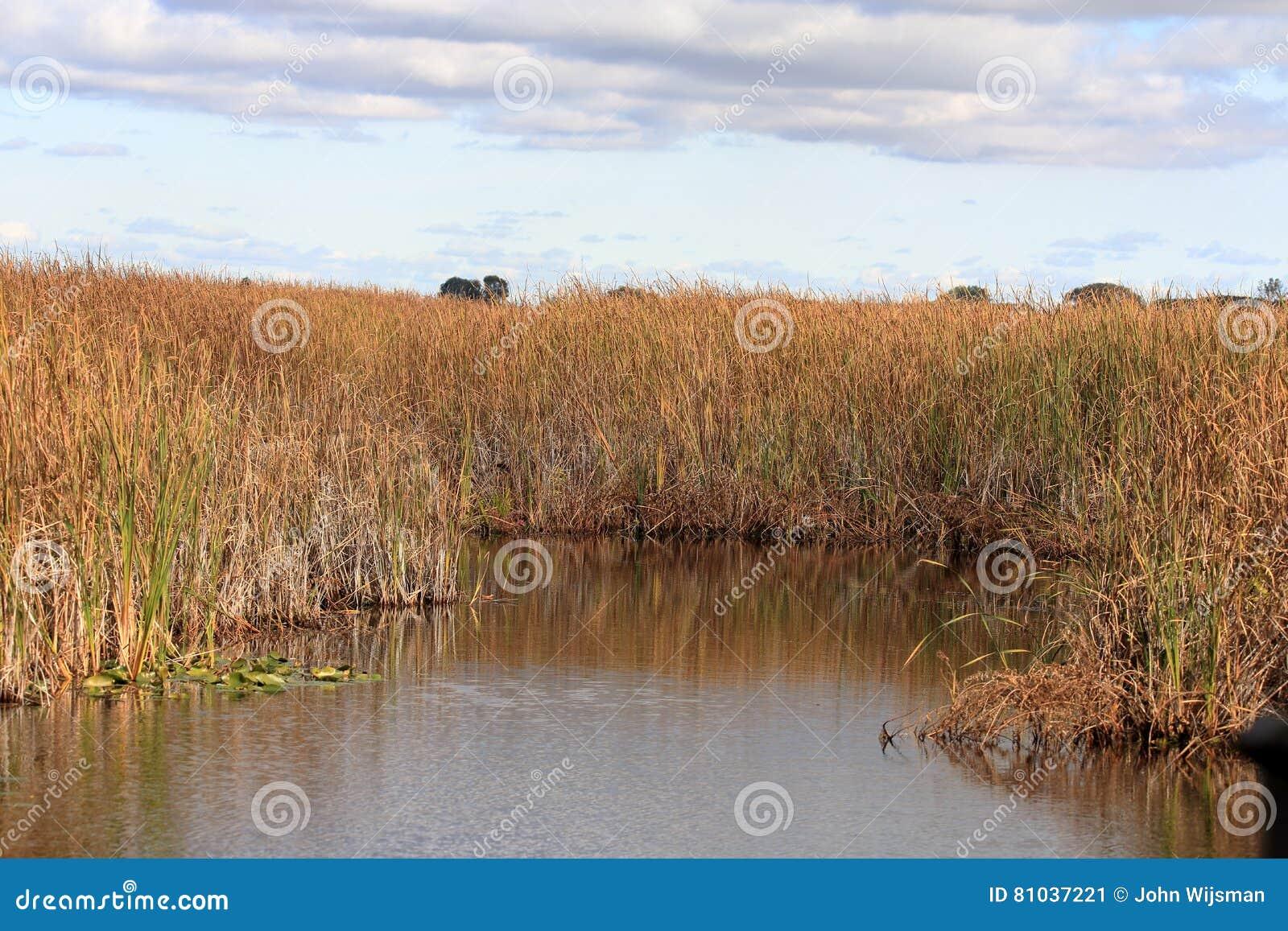 Травы и тростники болота отразили в бассейне