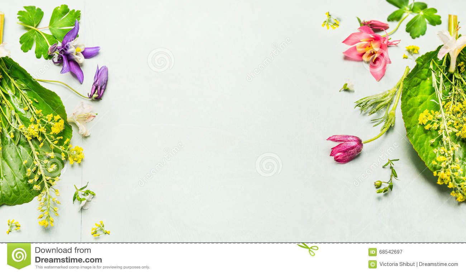 Травяная предпосылка с цветками сада лета или весны и заводом, рамкой
