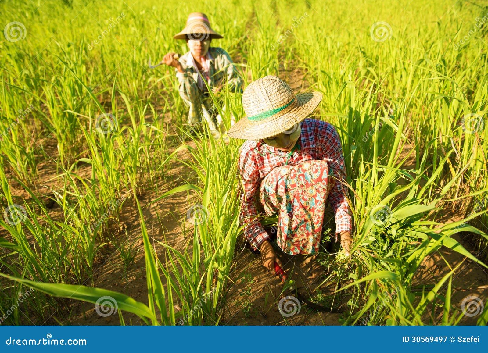 Традиционные азиатские фермеры