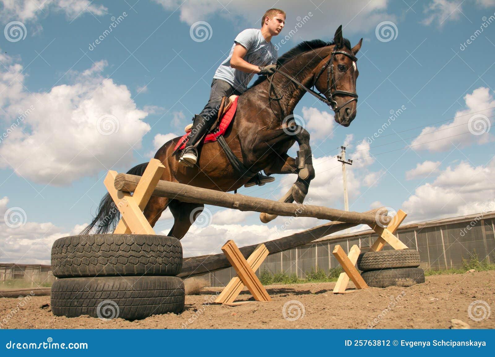 тренировка лошади