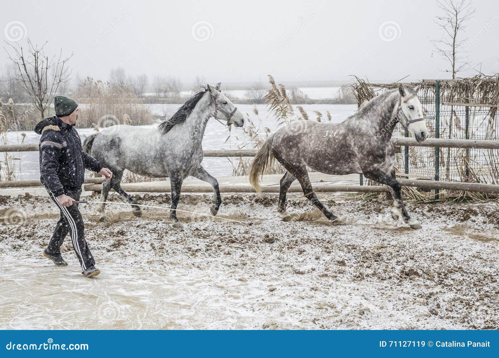 Тренировка лошади зимы