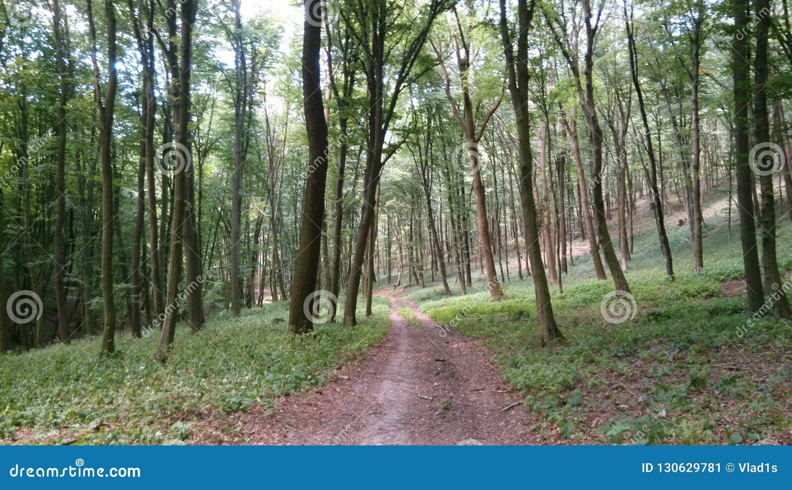 Тропа в лесе в западной Словакии