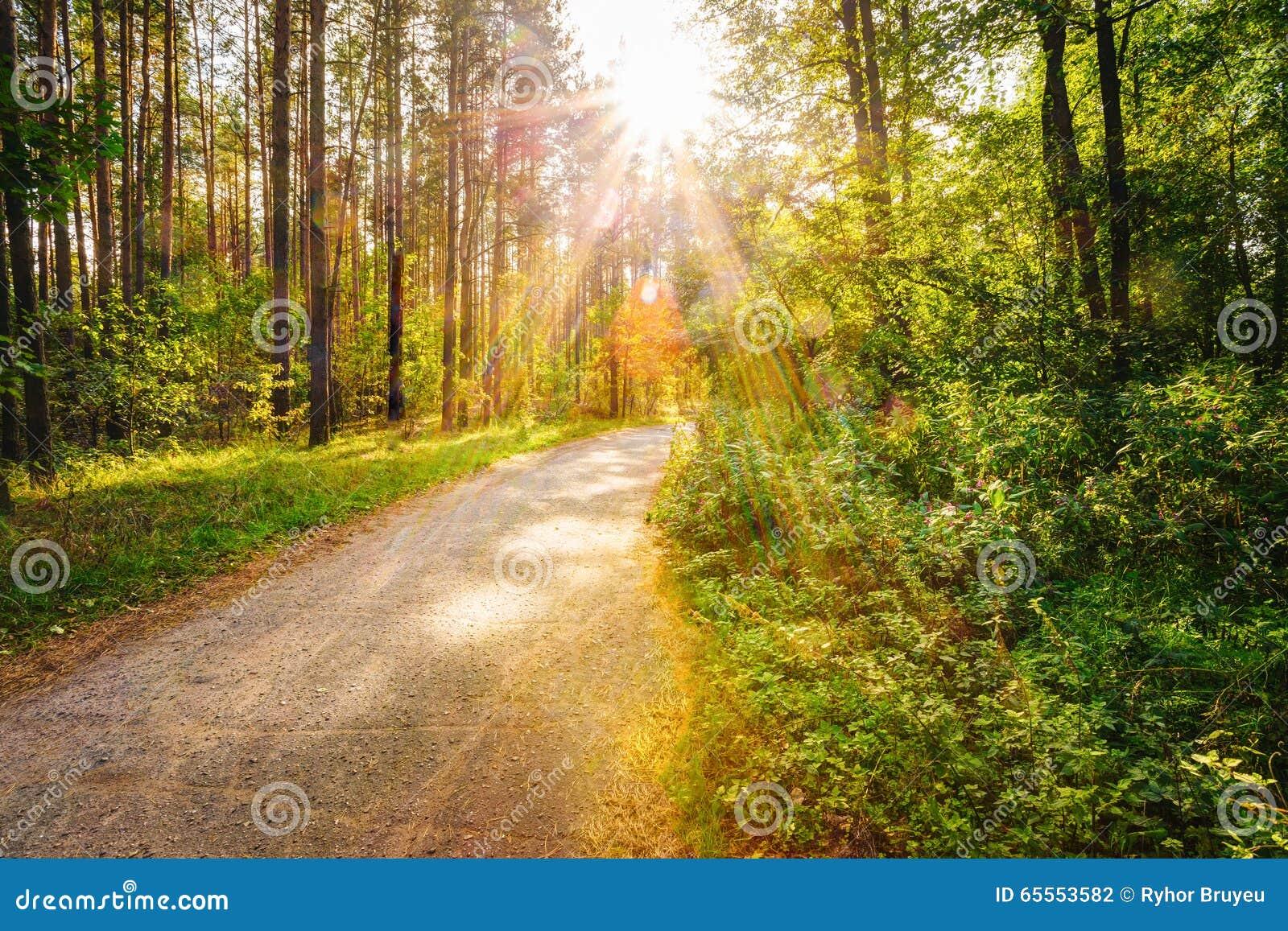 Тропа пути дороги пути на солнечный день в лесе лета солнечном на Солнце