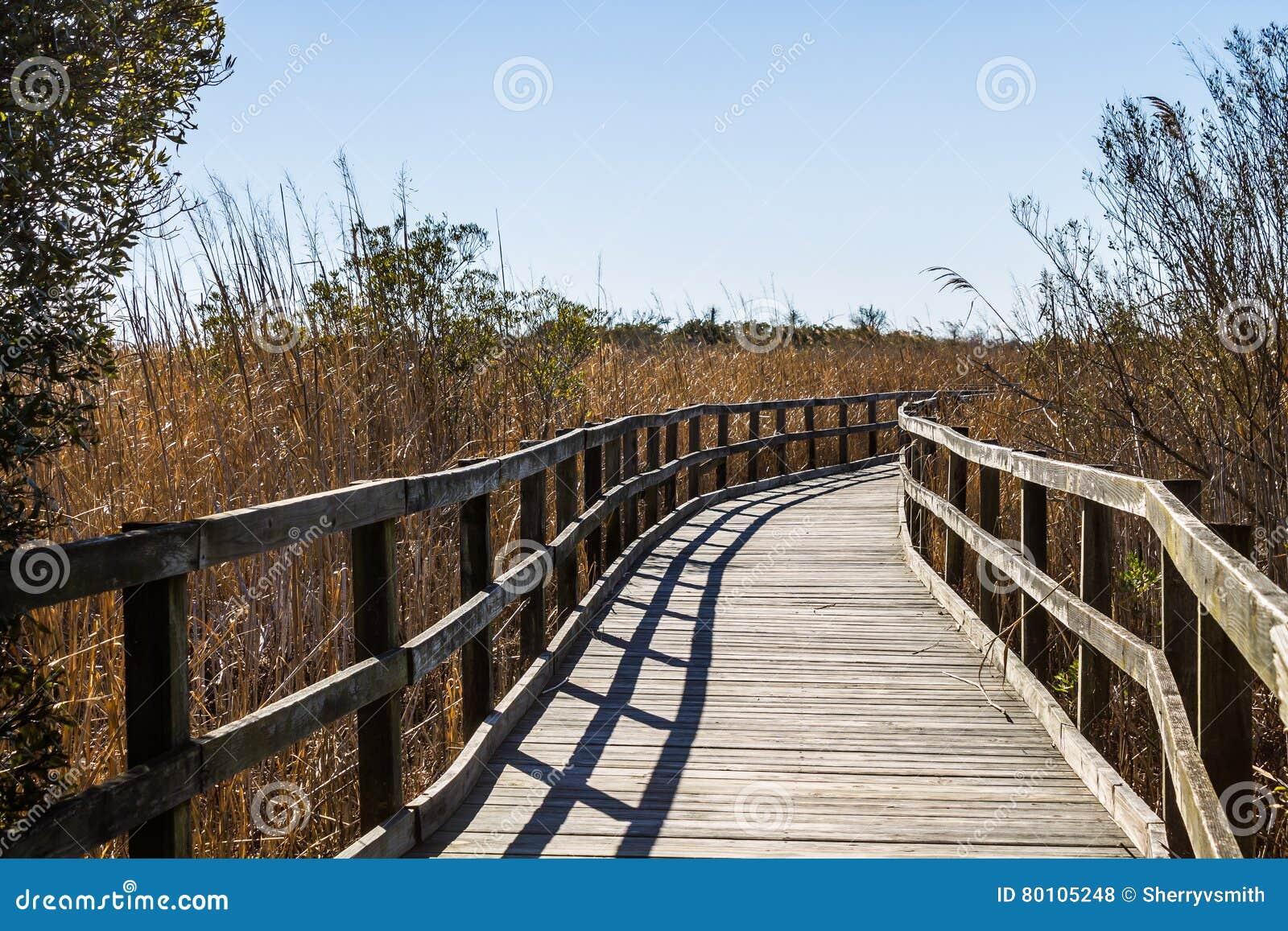 Тропа через тростники на задней охраняемой природной территории соотечественника залива