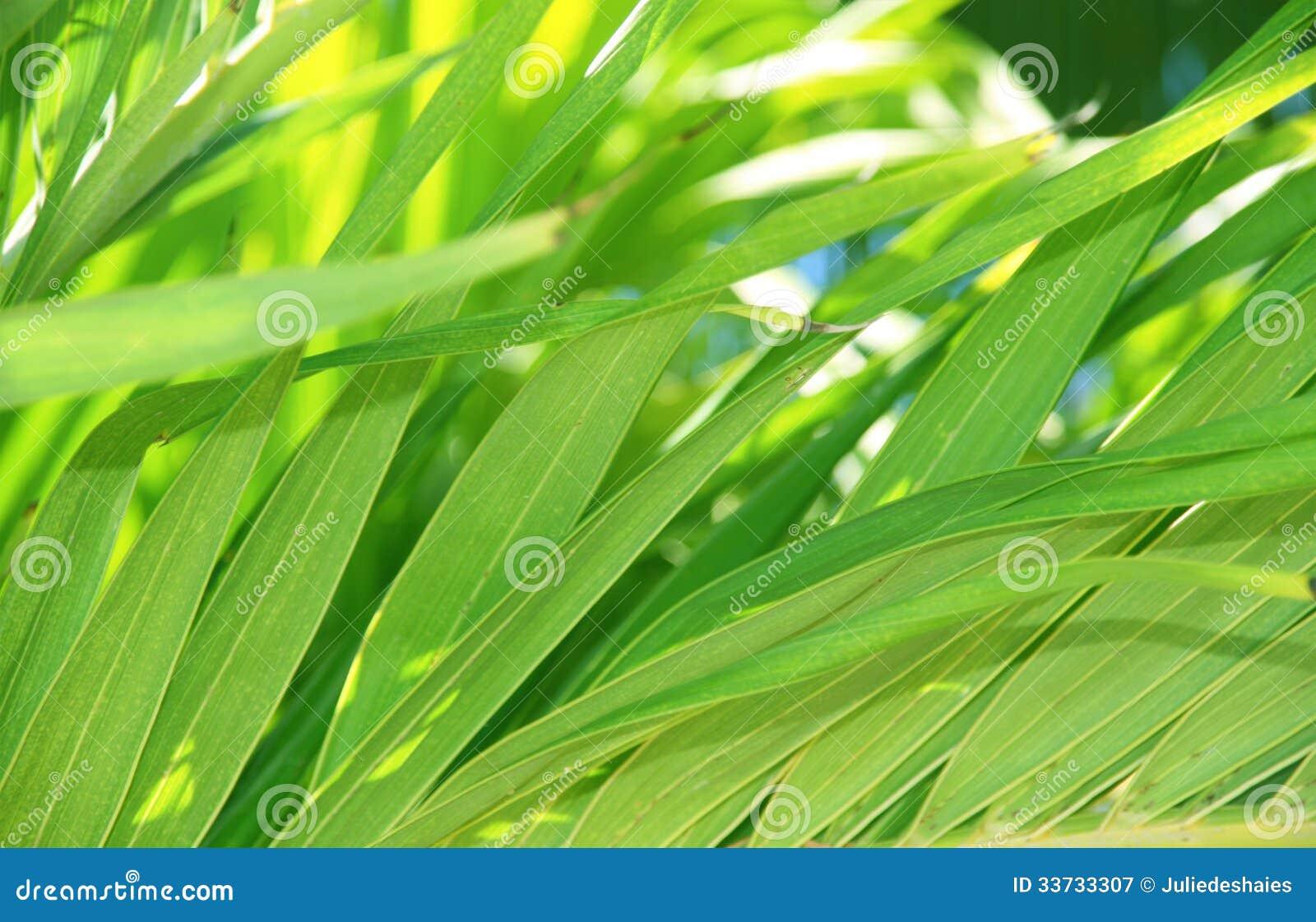 Тропическая предпосылка листьев