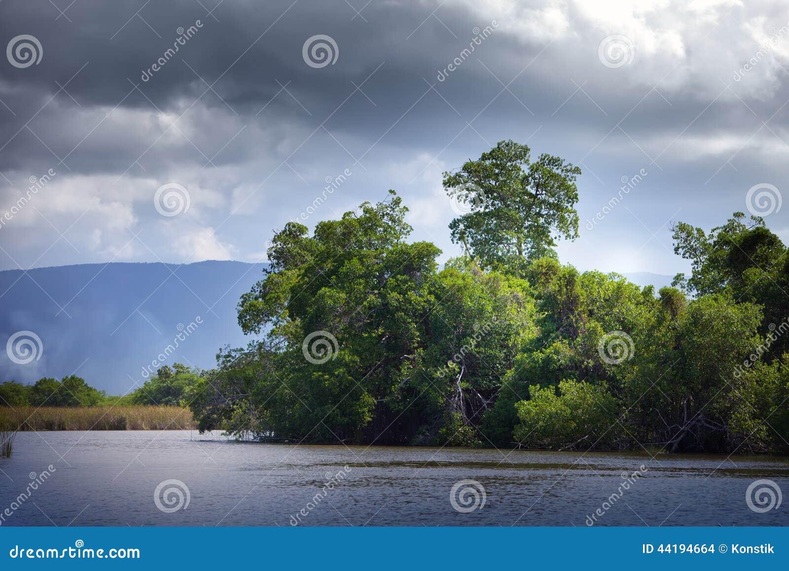 Тропическая пуща мангровы чащ на черном реке ямайка