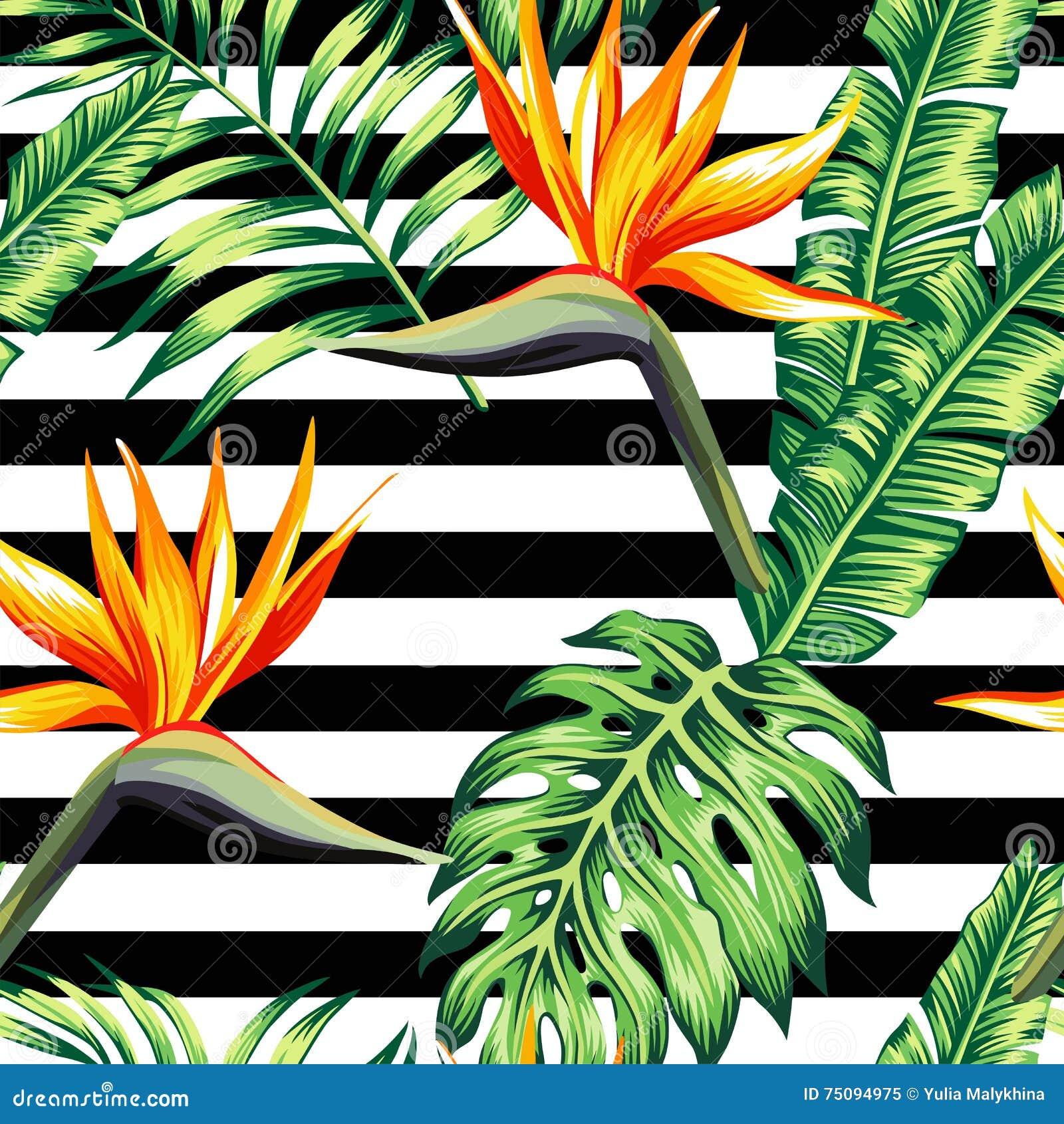 Тропическая флористическая безшовная предпосылка