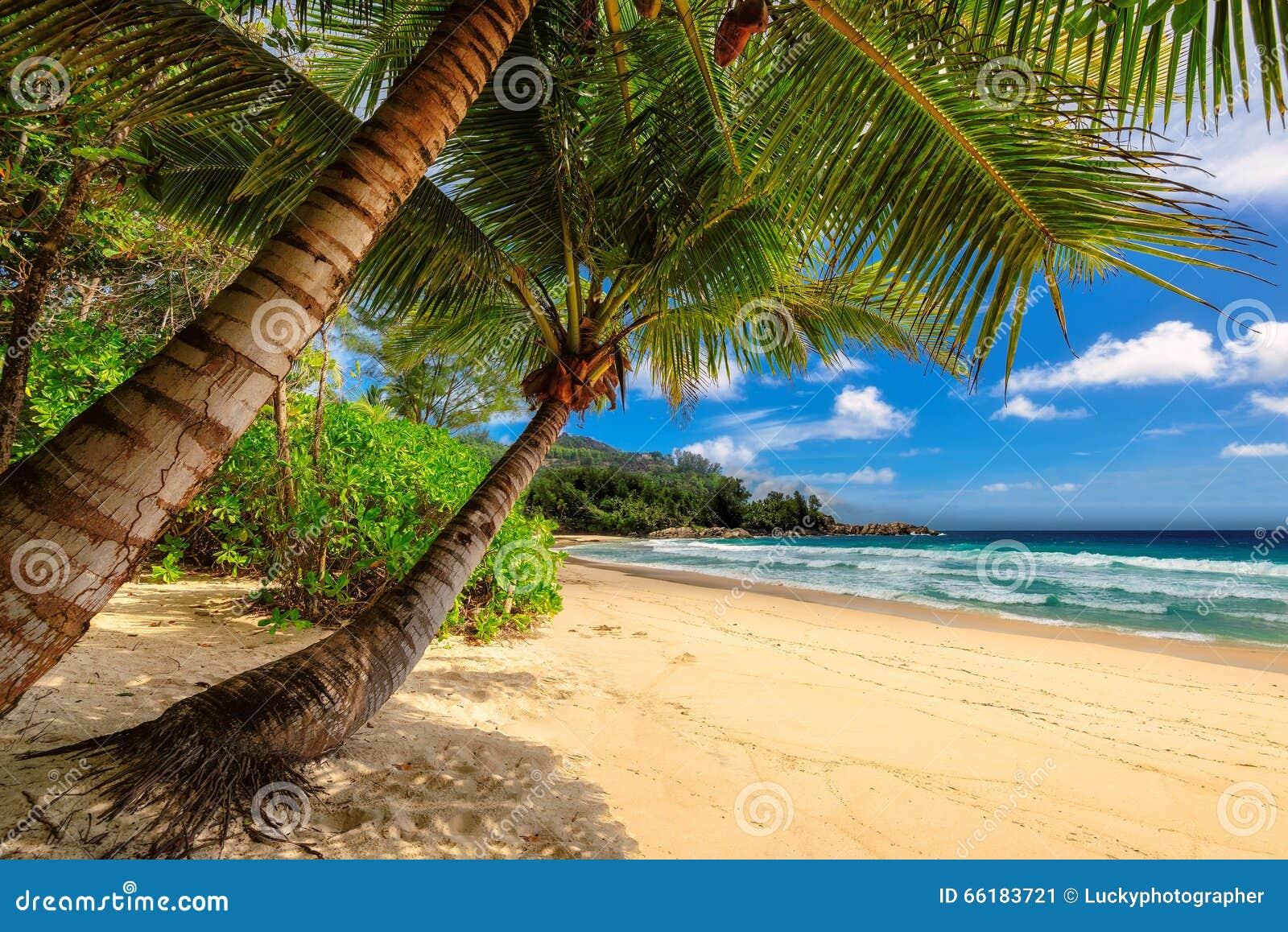 Тропические ладони приставают к берегу в ямайке на карибском море