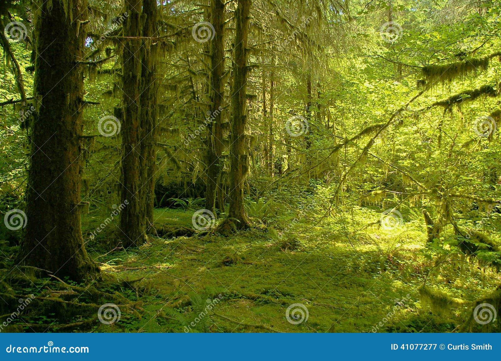 Тропический лес реки Hoh на олимпийском национальном парке