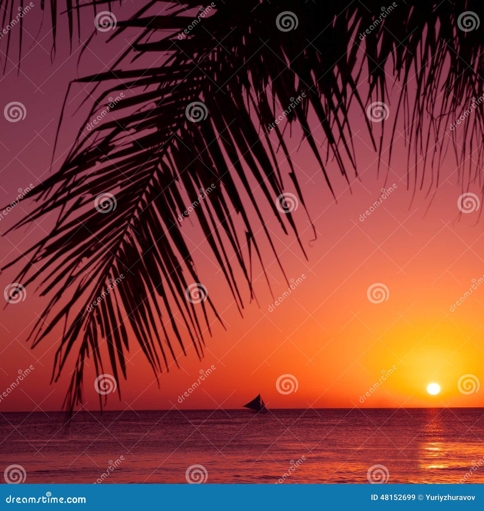 Тропический заход солнца Море, ладонь и солнце