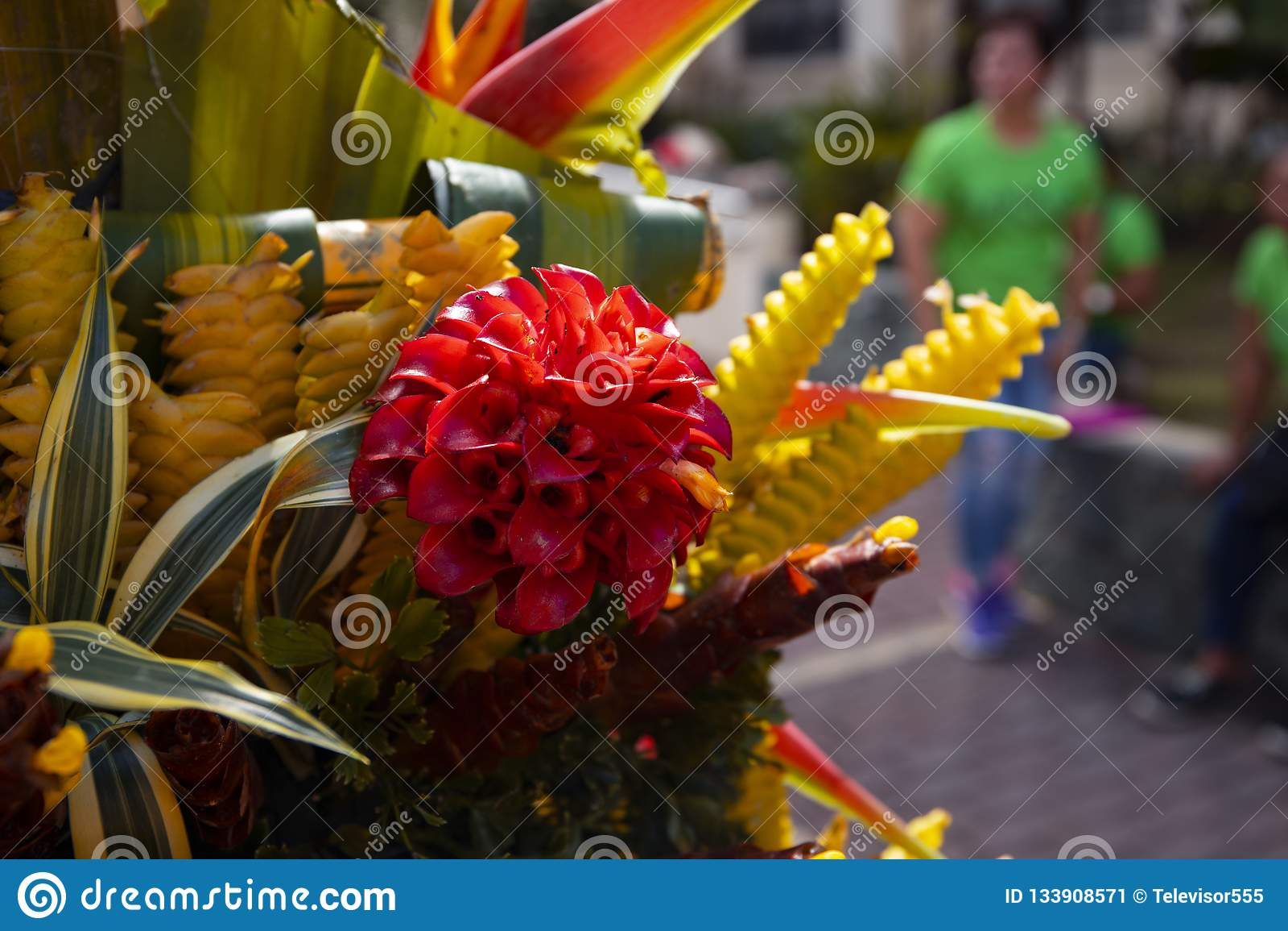 Тропический крупный план оформления цветков Экзотическое флористическое фото текстуры Романтичный шаблон знамени с тропическим цв