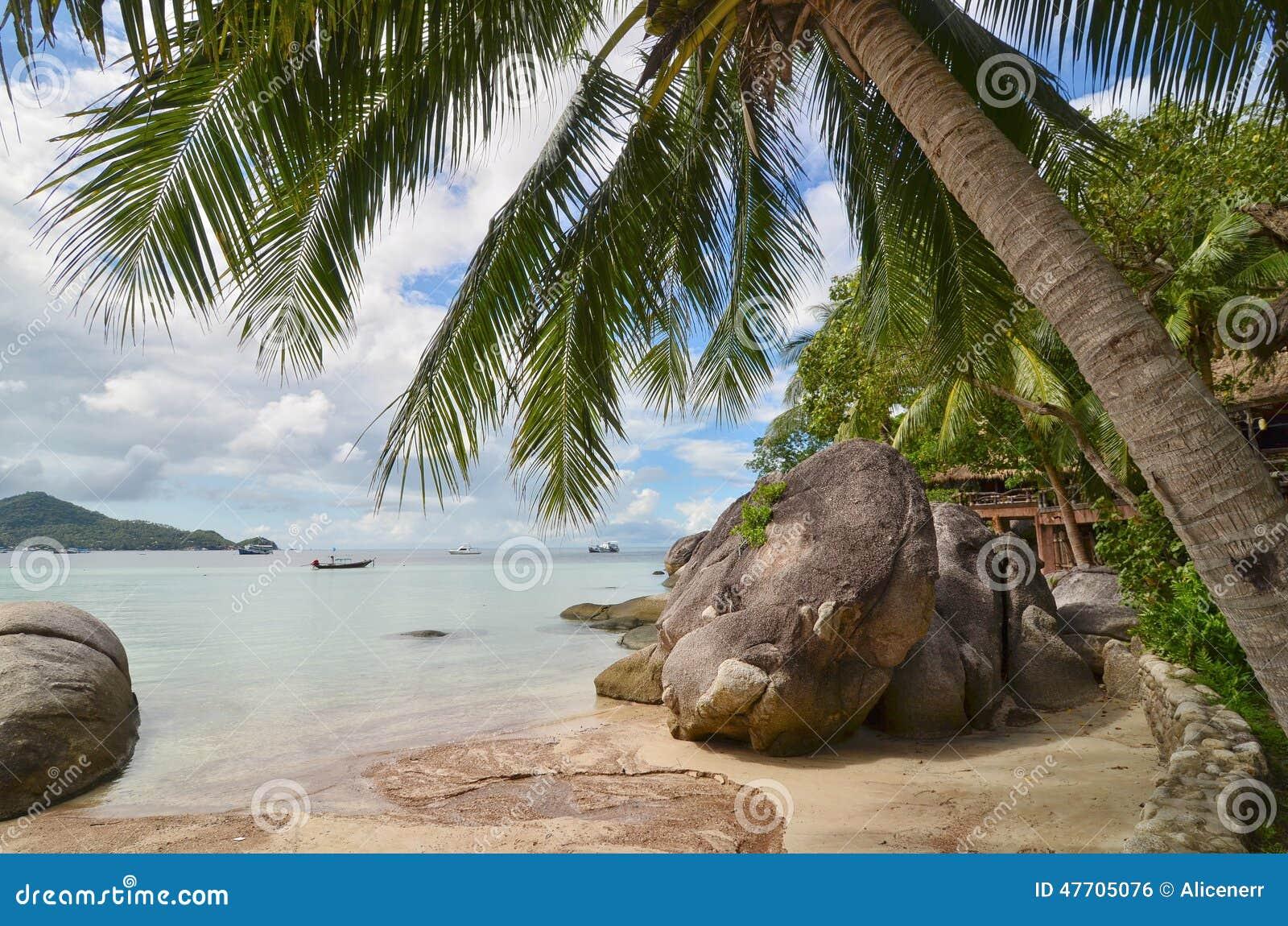 Тропический рай - крупный план пальмы и красивый песчаный пляж
